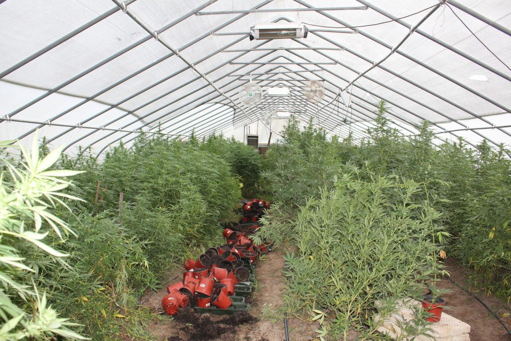 interior view of the grow house